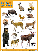 Плакаты (англ). FOREST ANIMALS (Лесные обитатели)